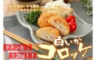 白いかコロッケ ドドンと1.2kg!! (オリジナルベシャメルソース+ほくほくポテト)