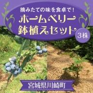 【04324-0002】ホームベリー鉢植えセット(3株)
