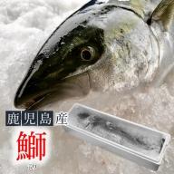 B2-4713/冷蔵ぶり1尾(内臓処理済み)