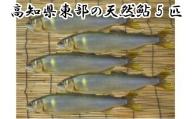 【四国一小さなまち】 ≪2021年産≫ 高知県東部の天然鮎(あゆ)5匹(18cm以上)