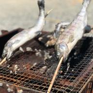 【日本三大秘境の川の恵】 椎葉村産 冷凍ヤマメ 10匹【新鮮・急速冷凍】