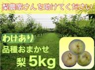 DS-21 【わけあり・品種はおまかせ】「ひょう」の被害を受けても力強く育つ大山町産の梨(5kg)