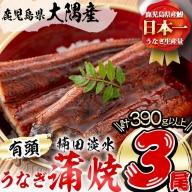 a5-187 楠田の極うなぎ 蒲焼き 130g以上×3尾(計390g以上)