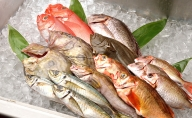 【光勝丸】漁師さんのおまかせ鮮魚セット
