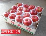 10月 贈答規格 シナノスイート約5kg(特秀~秀16~20玉)【大江町産・山形りんご・りんご専科 清野哲生】