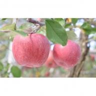平成31度 りんごの木オーナー