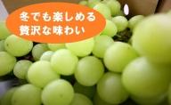 ★訳あり★信州産冬のシャインマスカット(約1.2kg分のくずれ房&粒)