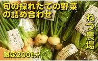 [5839-1219]【3~4人前】山梨県産:旬の採れたて野菜の詰め合わせ(栽培期間中農薬は使用していません)