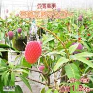<宮崎県産完熟マンゴー 1.5kg ご家庭用(3~7玉)>