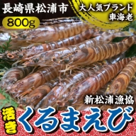 【C1-017】新松浦漁協 活きくるまえび800g※配達不可地域あり(離島・沖縄・北海道)