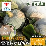 【2021年9月下旬発送】無農薬栽培!雪化粧かぼちゃ 6玉入り(約10kg)【かねこ農園】