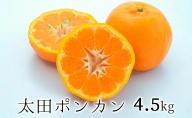 【2022年1月上旬より順次発送】静岡県清水生まれの美味しい柑橘・太田ポンカン 4.5kg