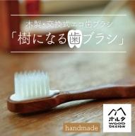 21-896.木製・交換式エコ歯ブラシ「樹になる歯ブラシ」