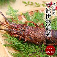 【N-29】高知県産冷凍伊勢海老1尾(1)(楽ちんハーフカット済)