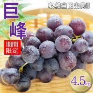 AI5 熊本県産 巨峰ぶどう 5kg