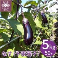 なすAL等級50本(5キロ)