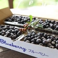 農薬・化学肥料不使用 南小国産 摘み立て冷凍ブルーベリー1kg