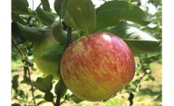 【家庭用】葉とらず 信州りんご サンつがる 5kg 長野市産