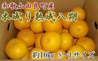 【産直】和歌山由良町産の木成り熟成八朔約10kg(SまたはMサイズをお届け)※2022年3月中旬~4月下旬頃に発送予定(お届け日指定不可)