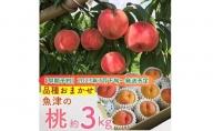魚津の桃「品種おまかせ」約3kg ヴィータ・デ・フルッタ関口農園
