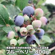 (03729)無農薬無化学肥料栽培  鳴子・中山平温泉産ブルーベリー800g