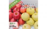 【先行予約】【訳あり】10月 旬の美味しいりんご約16kg【おまかせ2品種】【青森りんご】