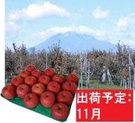 11月  サンふじりんご「特A」約5kg 糖度13度以上 【森山商店・平川市産・青森りんご・11月】