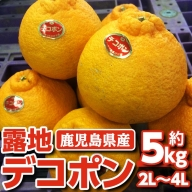 露地デコポン5kg_ja-646