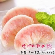 I-199 厳選!信州中野の桃 秀品 4~6玉(約1.5kg)
