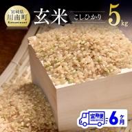令和3年産 ☆早場米☆ 玄米(こしひかり) 定期便(5kg×6ヶ月)