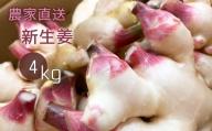 【E-15】季節限定「新」生姜(4kg):農家直送