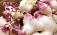【M-34】季節限定「新」生姜(2kg):農家直送