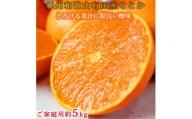G6109_とろける食感!ジューシー柑橘 せとか 約5kg(ご家庭用)  ※傷あり