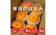 ZE6307_【まごころ手選別】有田のはるみ 6玉