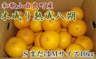 ZD6322_【産直】和歌山由良町産の木成り熟成八朔約10kg(SまたはMサイズをお届け)
