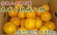 ZD6323_【産直】和歌山由良町産の木成り熟成八朔約10kg(Lまたは2Lサイズをお届け)
