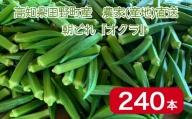 【四国一小さなまち】 ≪朝どれ:農家直送≫  新鮮オクラ ★240本★