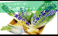 【先行受付/冬野菜セット】雪国米沢の寒中野菜3種と伝統野菜セット キャベツ 白菜 ねぎ