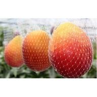 14-27_B級品完熟マンゴー