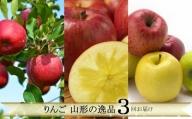 FY21-230 【定期便3回】りんご 山形の逸品