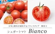 【先行予約】シュガートマト ビアンコ08(糖度8度以上) 1kg 高糖度 フルーツトマト