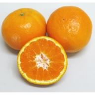 新品種の希少な柑橘!「はれひめ」 約5kg