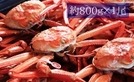 【おすすめ】紅ズワイガニ約800g(安吉タグ付き)【安吉水産】