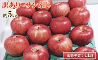 11月 訳あり りんご 約5kg 青森県産 サンふじ【糖度13度以上・青森りんご】