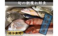【B-52】焼き魚用漁師おすすめ旬の朝獲れ鮮魚セット【漁師直送】