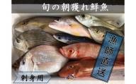 【B-53】刺身用漁師おすすめ旬の朝獲れ鮮魚セット【漁師直送】