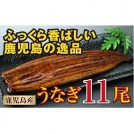【G-396】地下水で育てた鹿児島産特上うなぎ11尾