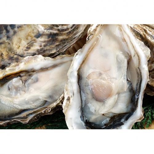 湧別サロマ湖産【COYSTER(むき身)×1+龍宮牡蠣3kg】1月~2月発送