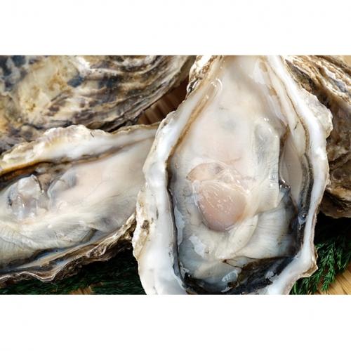 湧別サロマ湖産【COYSTER(むき身)×2+龍宮牡蠣5kg】1月~2月発送