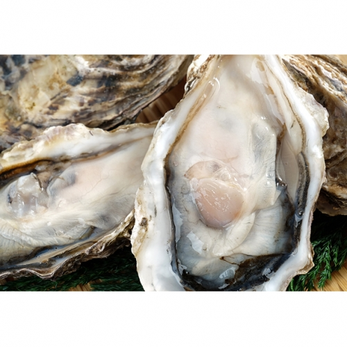 湧別サロマ湖産【COYSTER(むき身)×3+龍宮牡蠣5kg】1月~2月発送